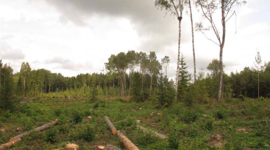 Vides organizācijas aicina atbildīgās valsts iestādes rīkoties, lai novērstu aizsargājamo putnu ligzdu koku nociršanu