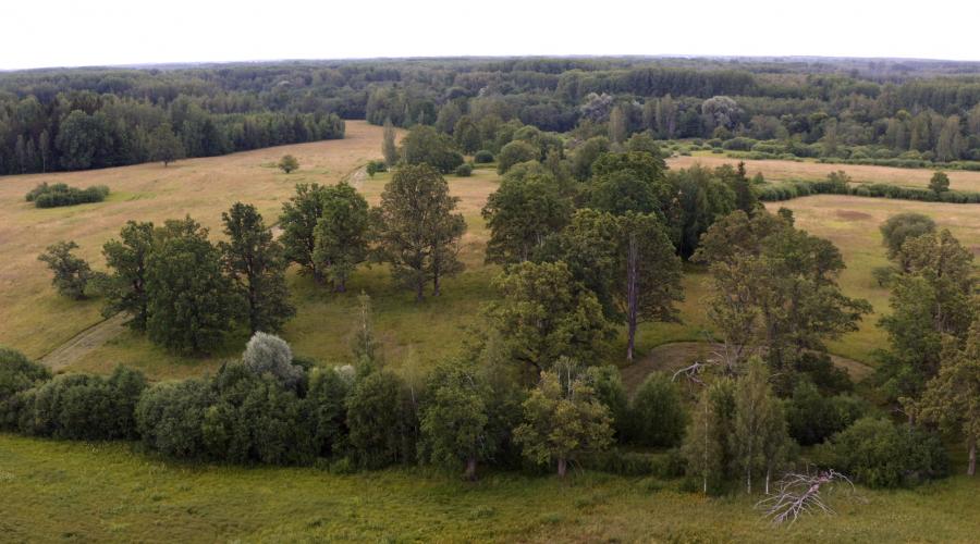 """Tapusi dokumentāla dabas filma """"Mazie ērgļi Latvijā"""""""
