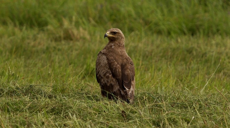 An Exploratory Short Film About the Lesser Spotted Eagle-Friendly Land Management Has Been Prepared